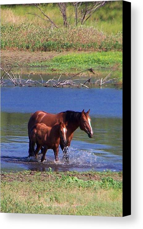 Horses Canvas Print featuring the photograph Okay Time To Go. by Lilly King