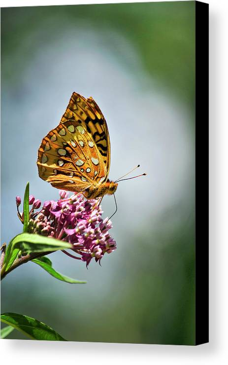 Butterfly Flower Canvas Print featuring the photograph Orange Butterfly by Christina Rollo