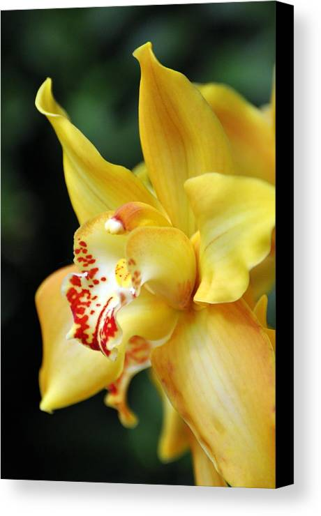 Orchid Canvas Print featuring the photograph Orchid 24 by Marty Koch