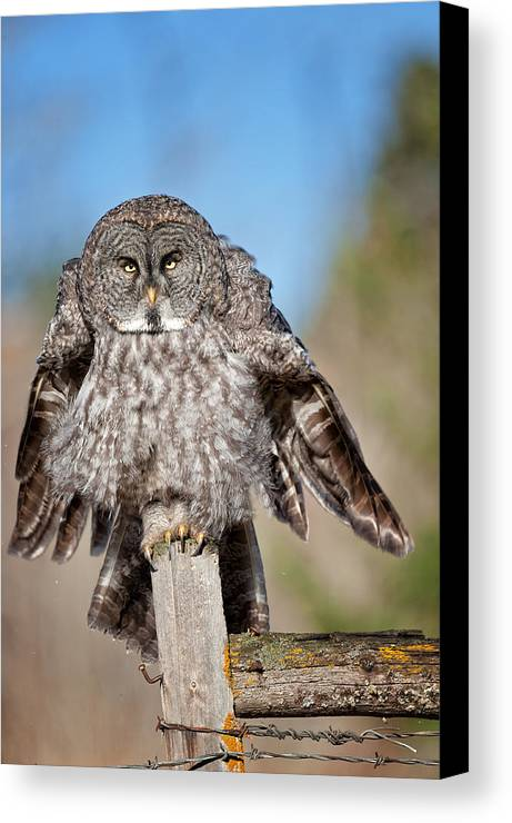 Owl Canvas Print featuring the photograph Owl 4 by Peter Olsen