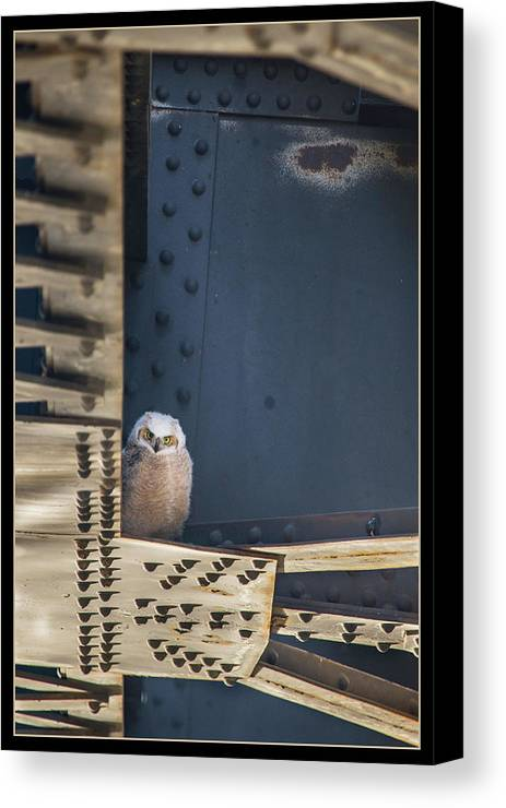 Canvas Print featuring the photograph Owls And Trestles by J and j Imagery