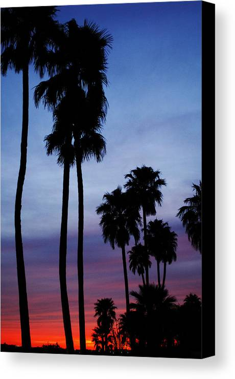 Palm Trees Canvas Print featuring the photograph Palm Trees At Sunset by Jill Reger