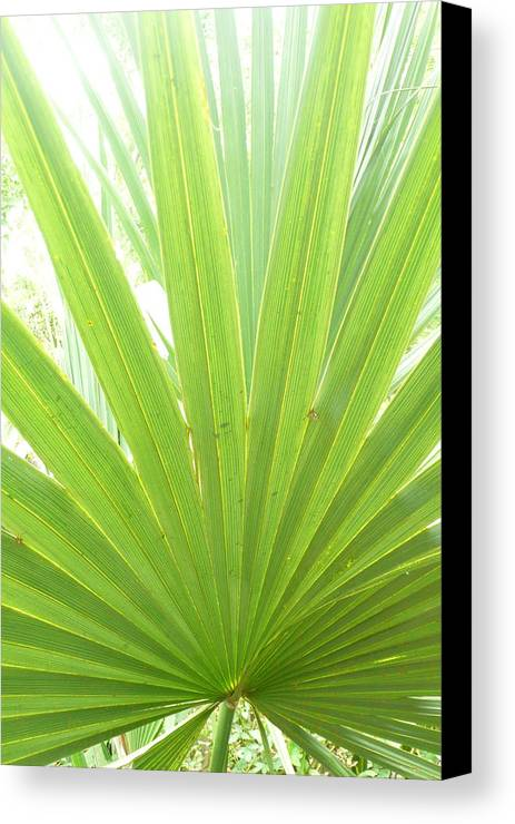 Green Canvas Print featuring the photograph Palmetto by Kathy Schumann
