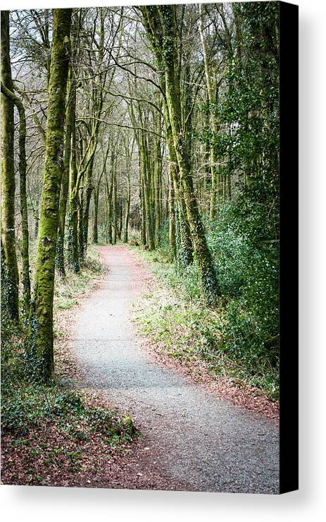 Path Canvas Print featuring the photograph Path To The Forest by Victor Vega