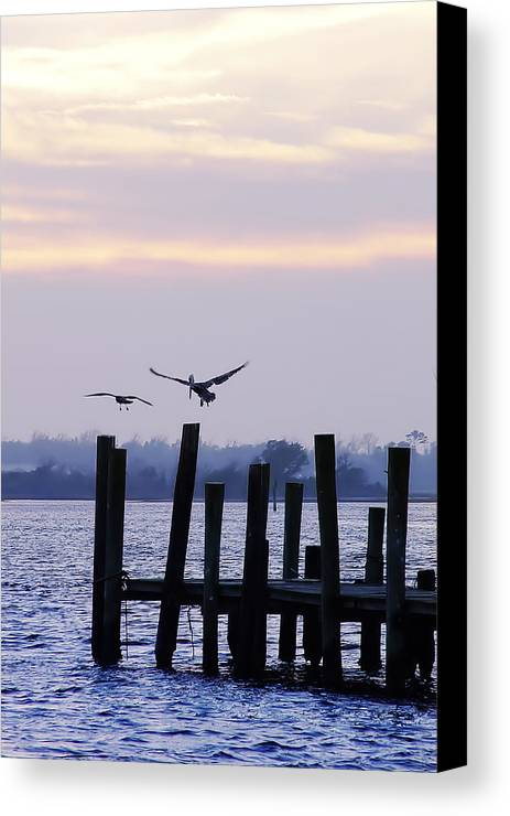 Photo Canvas Print featuring the photograph Pelican And Friend by Alan Hausenflock