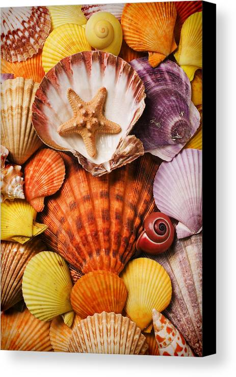 Seashells Canvas Print featuring the photograph Pile Of Seashells by Garry Gay