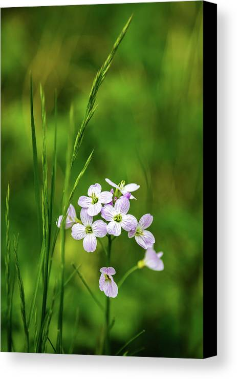 Color Canvas Print featuring the photograph Pink Flowers by MaryGail Perkins