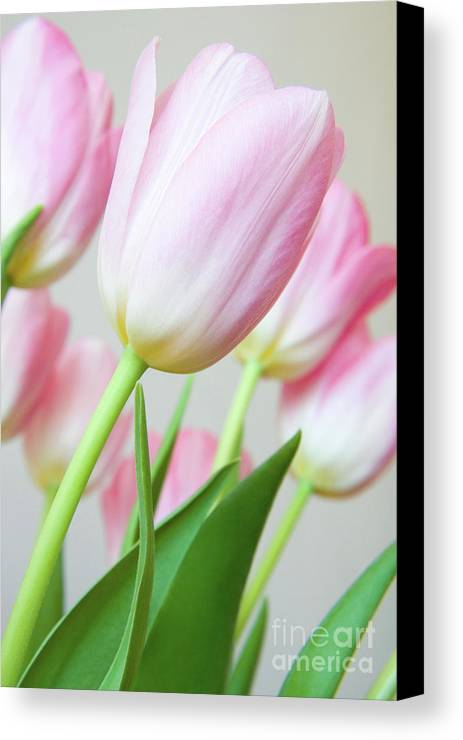 Flower Canvas Print featuring the photograph Pink Tulip Flowers by Julia Hiebaum