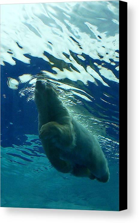 Polar Bear Canvas Print featuring the photograph Polar Swim by Jennifer Englehardt
