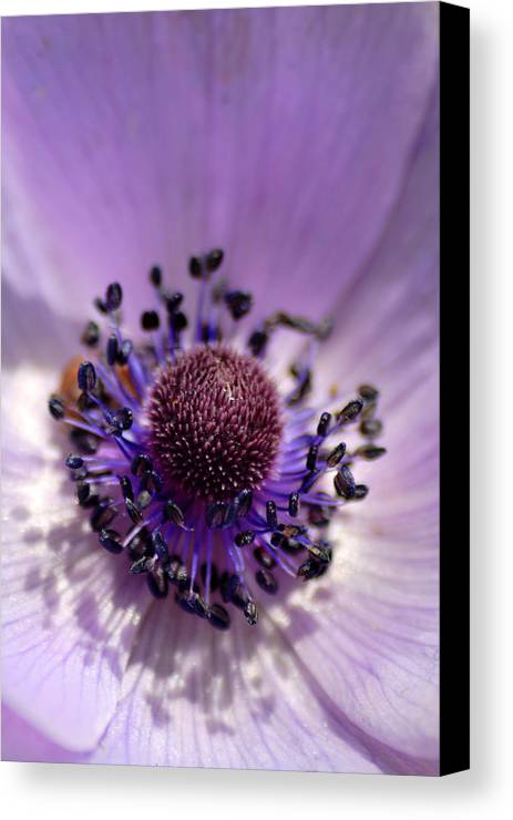 Flower Canvas Print featuring the photograph Purple Flower Universe by Pierre Leclerc Photography