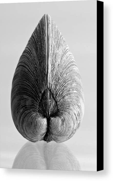 Abstract Canvas Print featuring the photograph Quahog Number 1 by Henry Krauzyk
