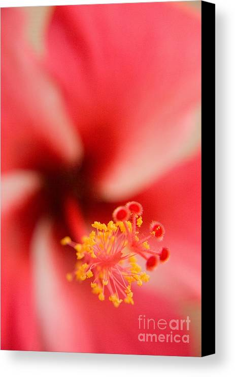 Nature Canvas Print featuring the photograph Red And White Hibiscus Flower by Julia Hiebaum