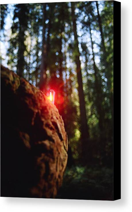Abstract Canvas Print featuring the photograph Red Burl by Steven Wirth