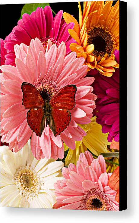 Butterfly Daisy Wings Flower Flowers Petal Petals Floral Canvas Print featuring the photograph Red Butterfly On Bunch Of Flowers by Garry Gay