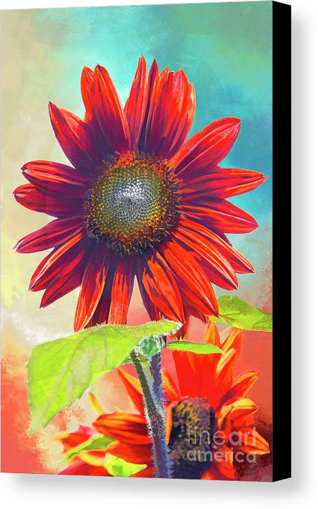 Helianthus Canvas Print featuring the photograph Red Sunflowers At Sundown by Regina Geoghan