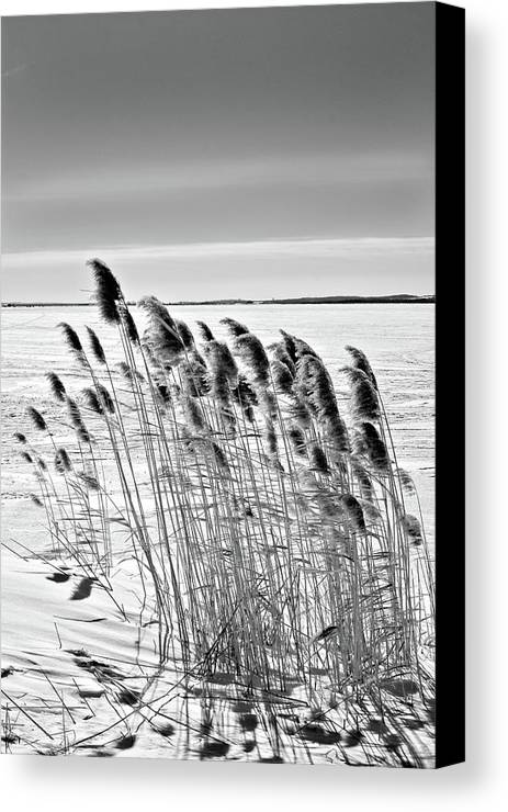 Black And White Canvas Print featuring the photograph Reeds On A Frozen Lake by Peter Pauer