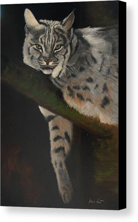 Bobcat Canvas Print featuring the painting Resting Up High by Greg Neal