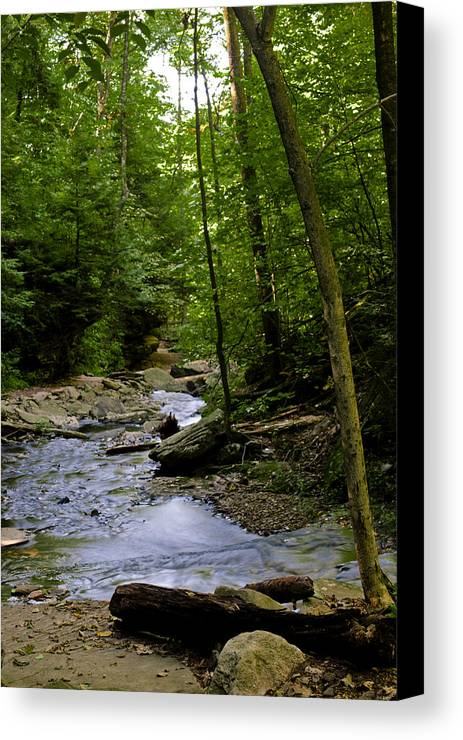 Waterfalls Canvas Print featuring the photograph Ricketts Glen 3 by Christina Durity