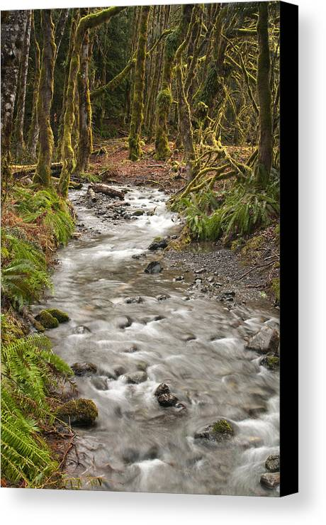 Forest Canvas Print featuring the photograph River Forest by Chad Davis