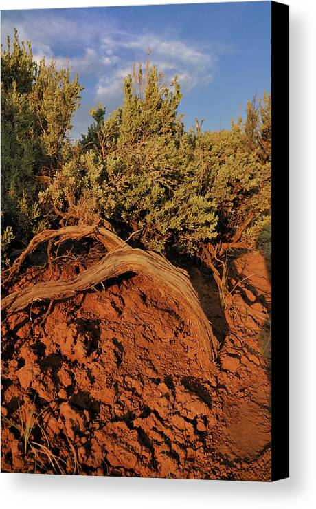 Landscape Canvas Print featuring the photograph Sagebrush At Sunset by Ron Cline