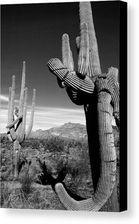 Arizona Desert Photography Canvas Print featuring the photograph Saguaro by John Gee