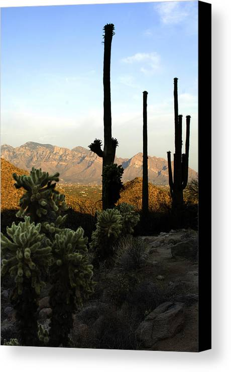 Saguaro Canvas Print featuring the photograph Saguaro Silhouette by Jill Reger