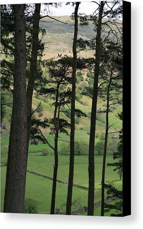 Pine Trees Canvas Print featuring the photograph Scots Pine by Andy Mercer