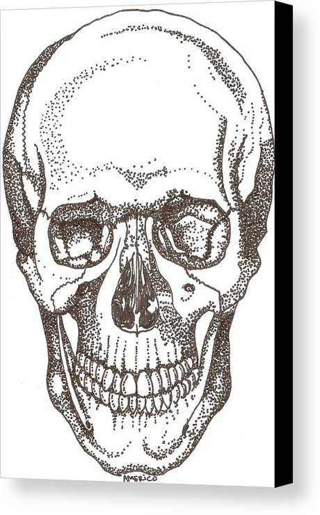 Skull Canvas Print featuring the drawing Skull by Americo Salazar