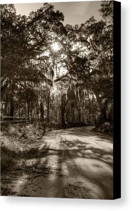 Live Oak Canvas Print featuring the photograph Southern Oak Shadows by Dustin K Ryan