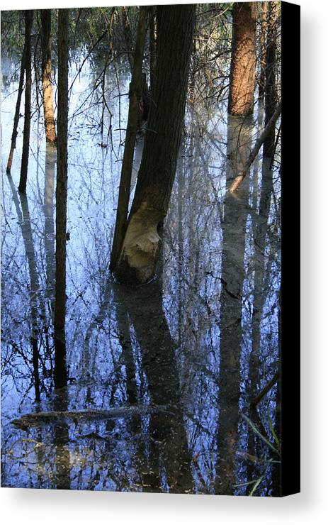 Bog Canvas Print featuring the photograph Still by Alan Rutherford