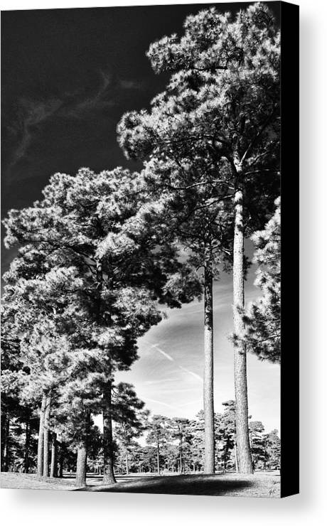 Nature Canvas Print featuring the photograph Stillness by Gerlinde Keating - Galleria GK Keating Associates Inc