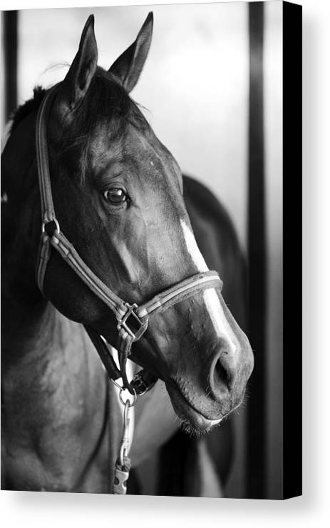 Horse Canvas Print featuring the photograph Horse And Stillness by Marilyn Hunt