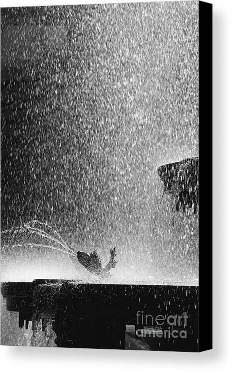 Summer Canvas Print featuring the photograph Summer Rain by Hideaki Sakurai