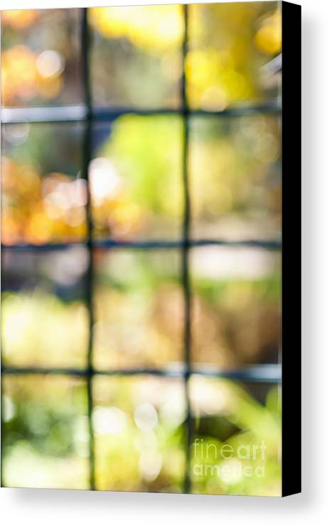 Window Canvas Print featuring the photograph Sunny Outside by Elena Elisseeva