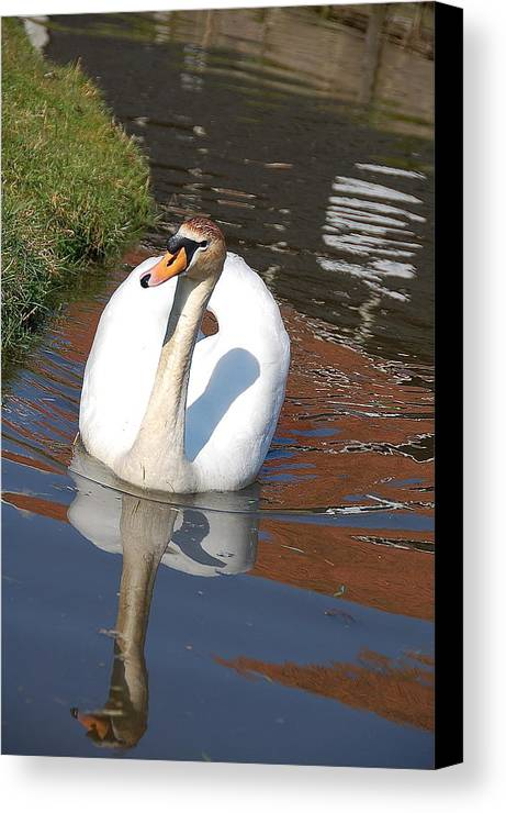 Swan Water Nature Reflection Canvas Print featuring the photograph Swan by Lucrecia Cuervo