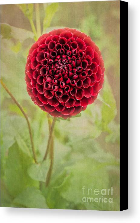 Canvas Print featuring the photograph Swirl Of Red by Marilyn Cornwell