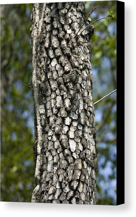 Tree Canvas Print featuring the photograph Texture by Magda Levin-Gutierrez