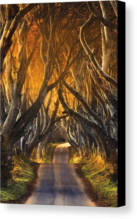 Take A View Canvas Print featuring the photograph The Dark Hedges IIi by Pawel Klarecki