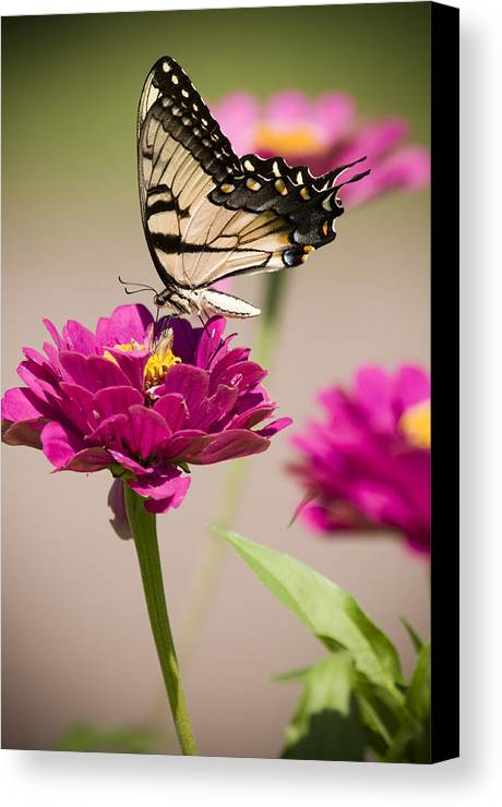 Butterfly Canvas Print featuring the photograph The Flower And Butterfly by Chad Davis