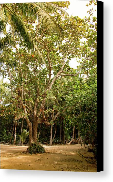 Mauritius Canvas Print featuring the photograph The Greeter by Max Ng