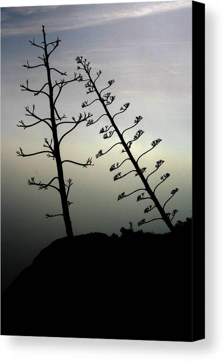 Branch Canvas Print featuring the photograph The Lonely Couple by Jason Hochman