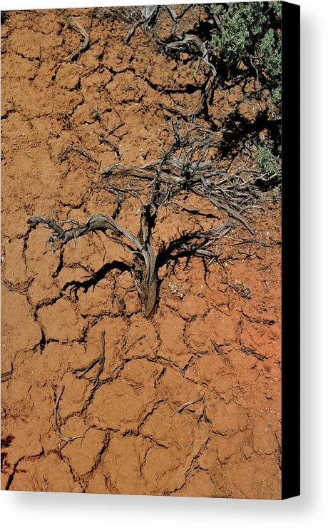 Landscape Canvas Print featuring the photograph The Parched Earth by Ron Cline