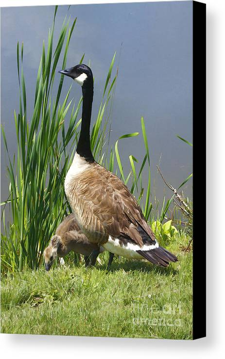 Goose Canvas Print featuring the photograph The Protector by Deborah Benoit