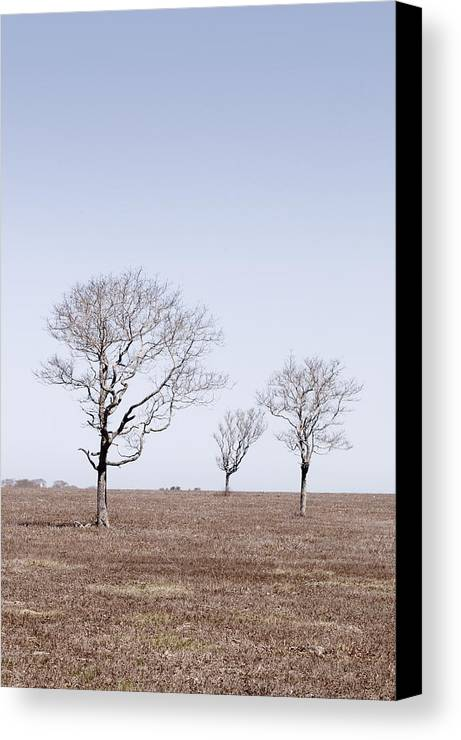 Trees Canvas Print featuring the photograph Three Trees - Nantucket by Henry Krauzyk