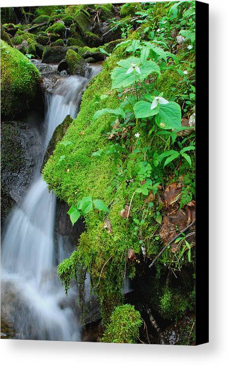 Trillium Canvas Print featuring the photograph Tillium By Baxer Creek by Alan Lenk