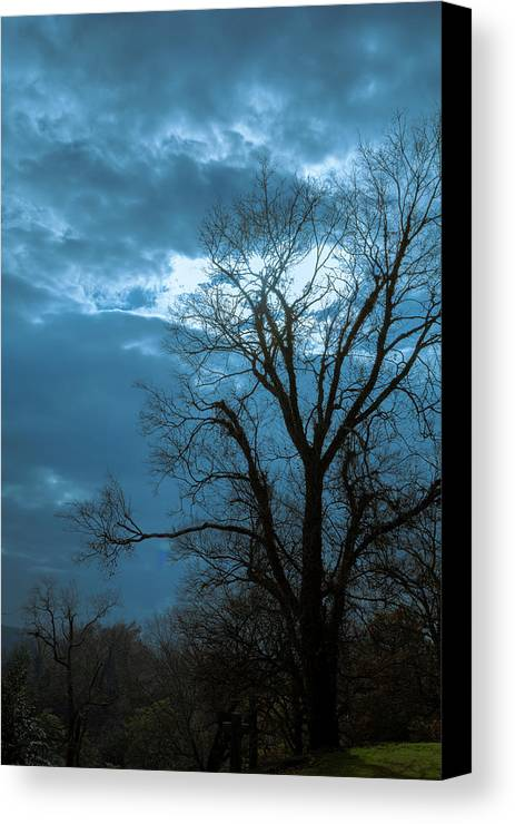 Tree Canvas Print featuring the photograph Tree # 23 by James L Bartlett