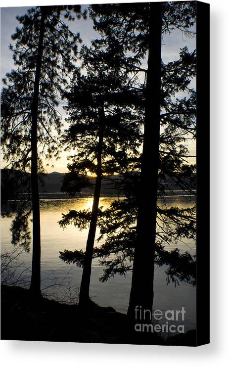 Trees Canvas Print featuring the photograph Trees By The Lake by Idaho Scenic Images Linda Lantzy