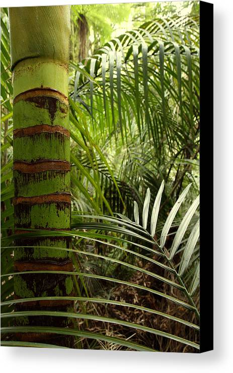 Bush Canvas Print featuring the photograph Tropical Forest Jungle by Les Cunliffe