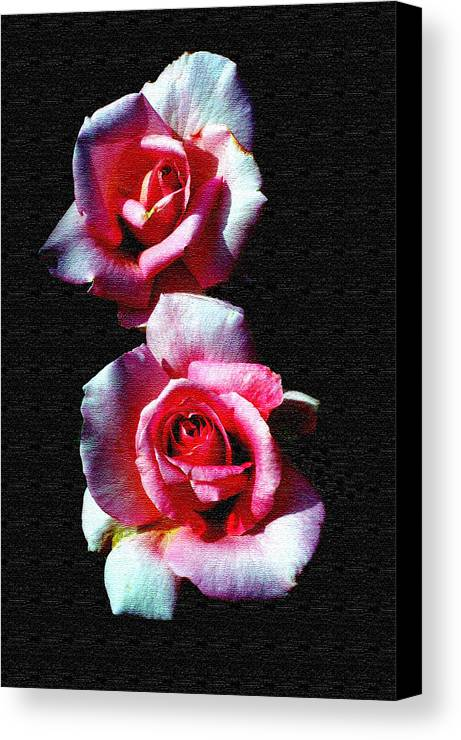 Rose Canvas Print featuring the photograph Twin Roses by Ralph Perdomo