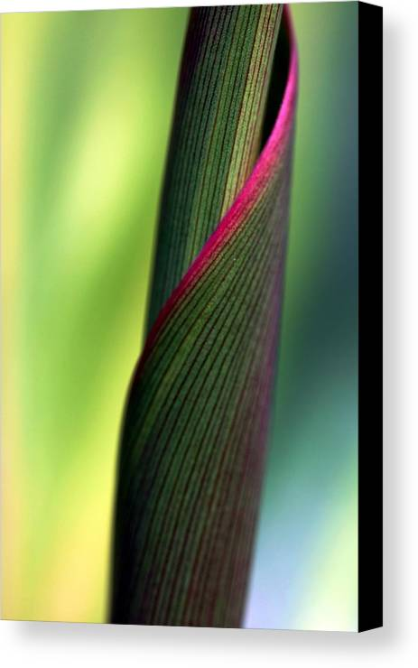 Cabbage Tree Canvas Print featuring the photograph Uncommon by Mitch Cat